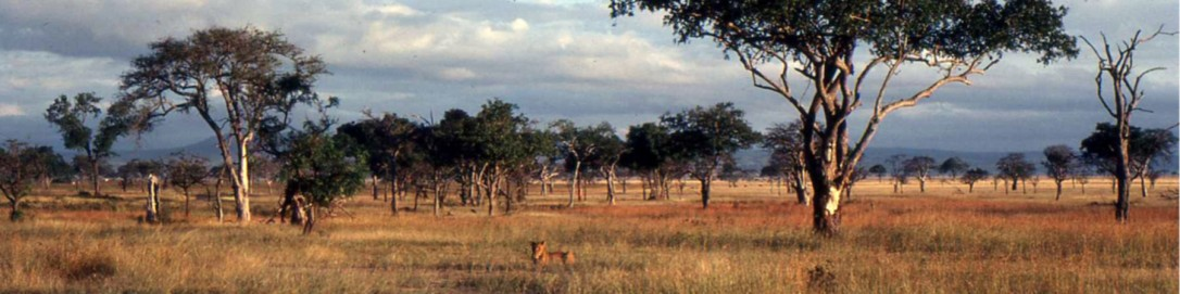 Mikumi_National_Park_Banner